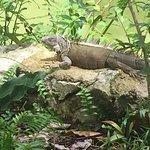 jardines gran mayan con Iguana