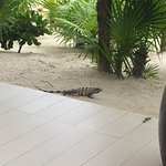 There are giant iguanas roaming the grounds- but we grew to enjoy them.