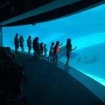 Foto di Texas State Aquarium