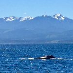 Photo de Eagle Wing Whale Watching Tours