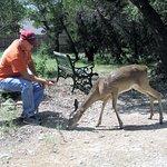 Husband feeding deer
