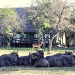 Nkorho Bush Lodge Photo