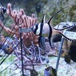 Photo de Muséum-Aquarium de Nancy