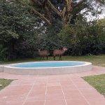 Lake Naivasha Country Club-Sun Africa Hotels Foto