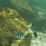 Photo de Sutera Harbour Resort (The Pacific Sutera & The Magellan Sutera)