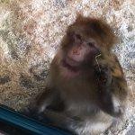 Photo de Helsinki Zoo