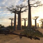 Photo of Avenue of the Baobabs