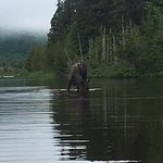 moose from the canoe