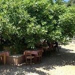 Photo of Odysseas Taverna