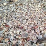 Shells shells and more shells right down on the beach from the hotel....