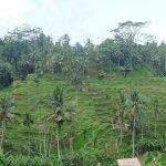 Photo de Tegalalang Rice Terrace