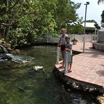 inside the park, parrot fish, sea turtles