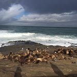 The sea lions doing their thing
