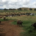Photo de F. King Tours and Safaris - Day Tours