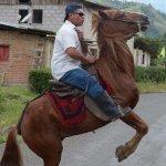 Zambo the horse
