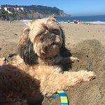 Great dog beach!