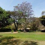 The Plantation Lodge & Safaris