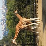Photo de Taronga Zoo