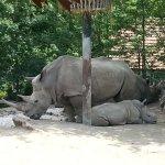 la savane africaine avec ces calaos rhinocéros