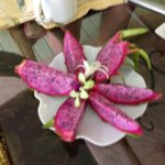 breakfast - dragon fruit