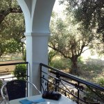 View from our ground floor balcony. Olive grove + chickens