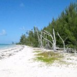I look at Undeveloped Beach Front Property