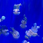 Photo de Ripley's Aquarium Of Canada