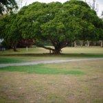 Foto de Plum Tree Club on Rockley Golf Course