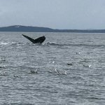 We had a great time getting to see the whales feeding. Captain Wayne and his son were outstandin