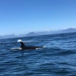 Photo of Remote Passages Marine Excursions
