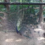@ Nandankanan Zoological park