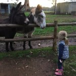 Some of the animals who live on the farm!