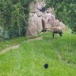 Toronto Zoo Foto