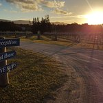 A perfect sunset over the vineyard walk....