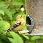 The Audubon Center has feeders set up near their office/museum.
