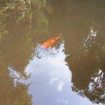 Foto de Deutscher Wald / Bosque Alemao