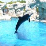 spettacolo delfini