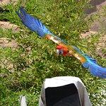 spettacolo pappagalli