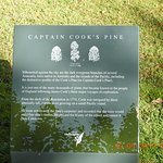Info on Captain Cook's tree