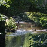 The River Teign - stones throw from the pub. Great walks long walks up/down the banks.
