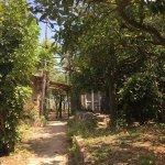 I spy Sorrento through the Gargiulo farm trees