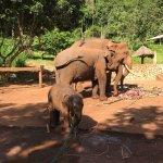 Photo of Patara Elephant Farm - Private Tours