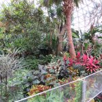 some of the beautiful plants within the conservatory