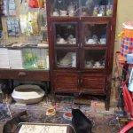 Lobby cats