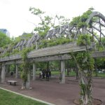 Vine covered walkway in the park