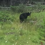 We encountered a small black bear on the way to Medicine Lake.