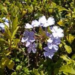Photo de Jardi Botanic Marimurtra
