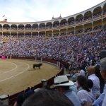 El toro examina a los espectadores