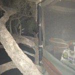 Dove's Nest 4th level treehouse bedroom