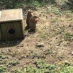Photo de ZooAmerica North American Wildlife Park